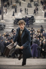 Animali fantastici e dove trovarli - Eddie Redmayne 'Newt Scamandro' in una foto di scena - Photo Credit: Jaap Buitendijk.